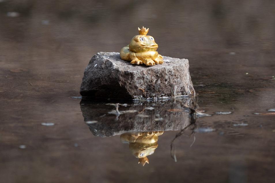Stolz blickt er auf sein Reich: der goldene Froschkönig im Burgteich.