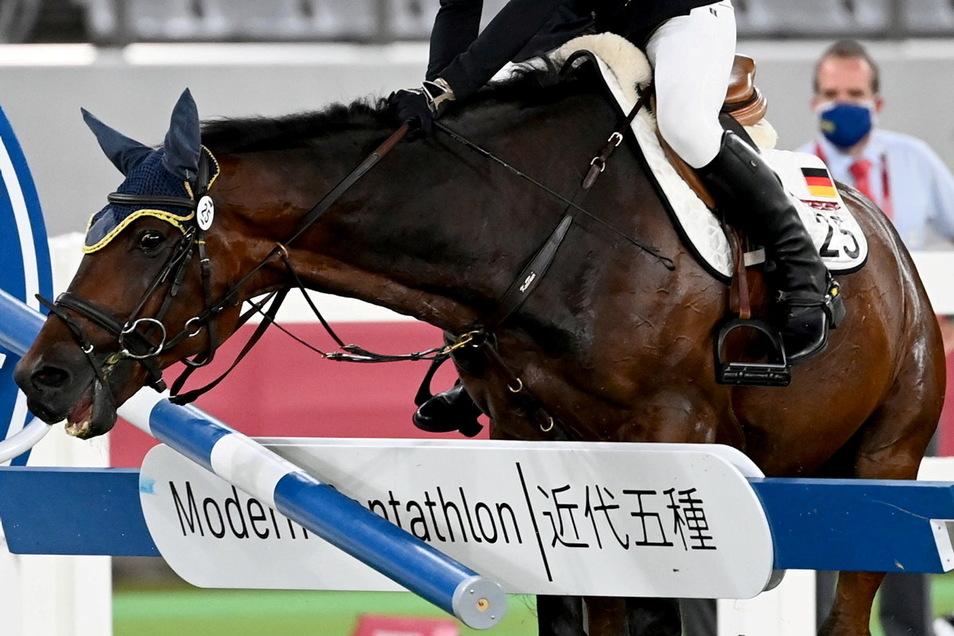Das Pferd Saint Boy verweigert Annika Schleu beim Springreiten im Modernen Fünfkampf das Hindernis. Im fiktiven Interview vergleicht der Hengst die Situation mit dem Ponyreiten auf dem Weihnachtsmarkt.