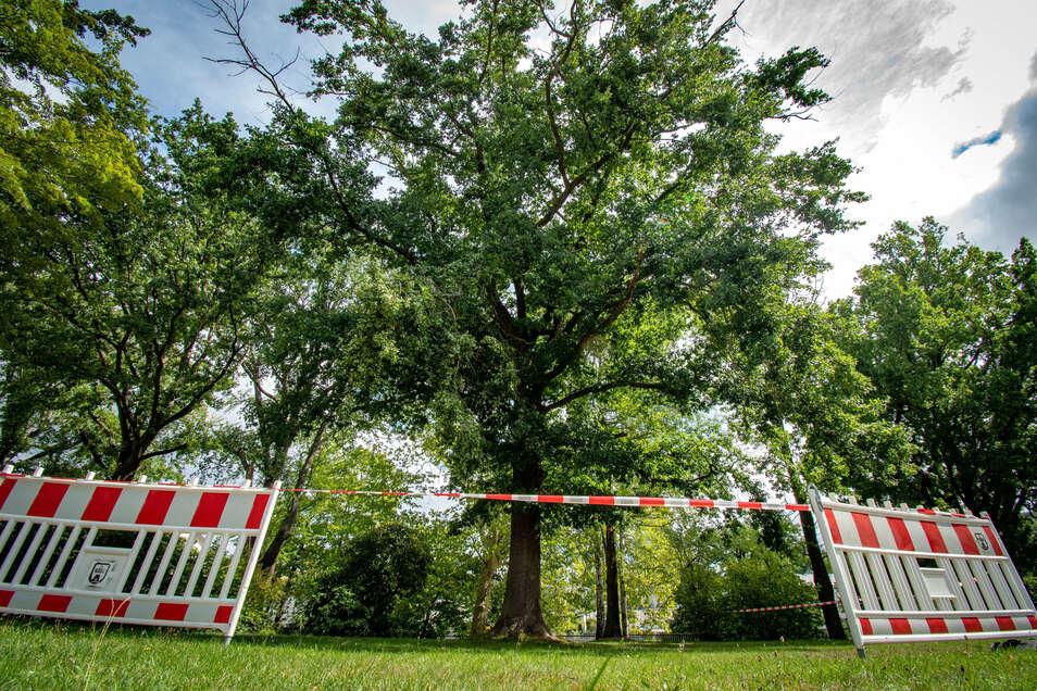 Weil ein großer Ast lose im Baum hängt, musste der Brückenmühlenpark in Waldheim gesperrt werden.