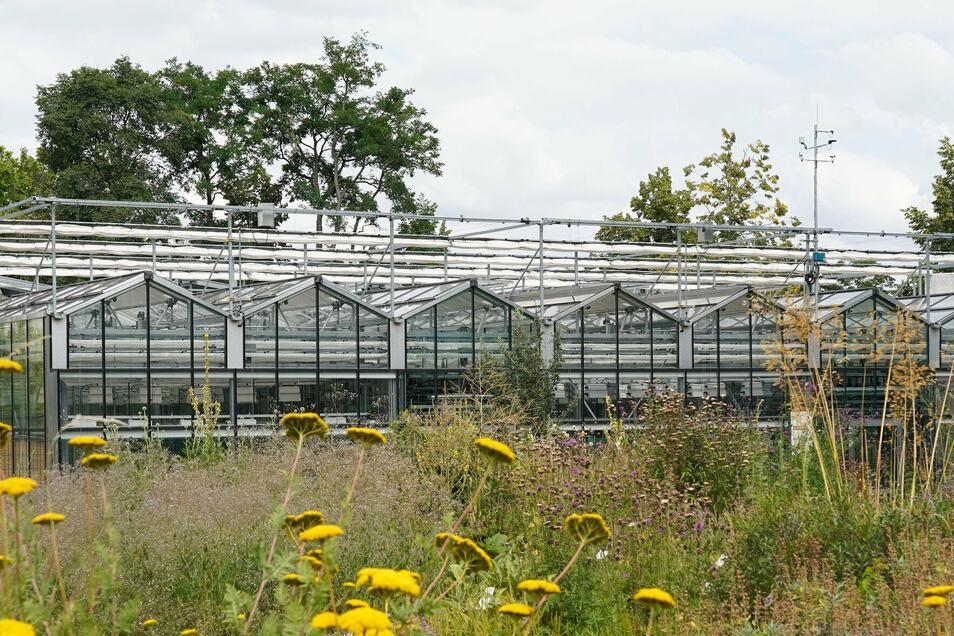 Die Außenansicht des Forschungsgewächshaus des Biodiversitätszentrums (iDiv) in Leipzig auf dem Gelände des Botanischen Gartens.
