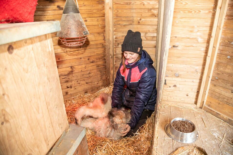 Im Tierheim Horka werden die Bewohner auch bei Frostbedingungen gut versorgt.