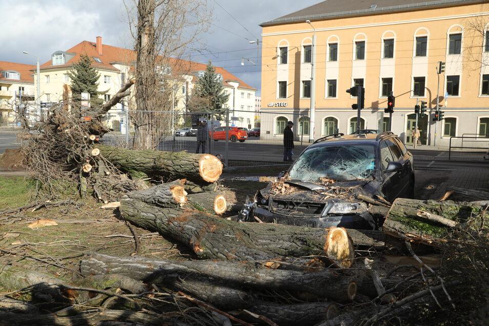 An der Bodenbacher Straße in Dresden kippte eine morsche Pappel gegen ein Wohnhaus und auf ein geparktes Auto.