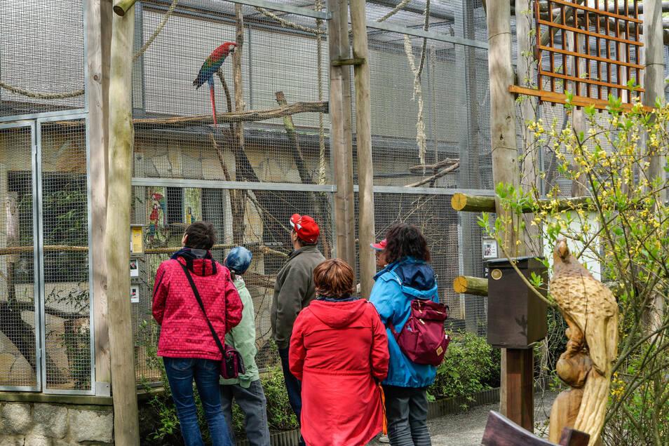 Jetzt freuen sich die Papageien wieder über Besucher und bekommen genug Vorlagen zum Nachahmen.