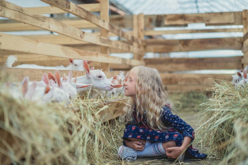 """Wer seinen Tieren etwas Gutes tun will, setzt auf regionales Futter von """"Kornkraft""""."""