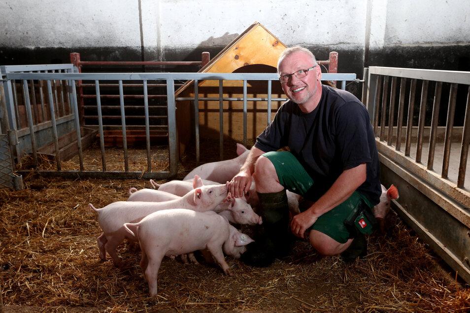 Sven und Torsten Krawczyk bieten jedem Schwein acht Quadratmeter. 100 schlachten sie im Jahr. Statt erwachsene Mastschweine zu kaufen, verbringen die Tiere ihr Leben inzwischen von Anfang bis Ende auf dem Hofgut Westewitz.