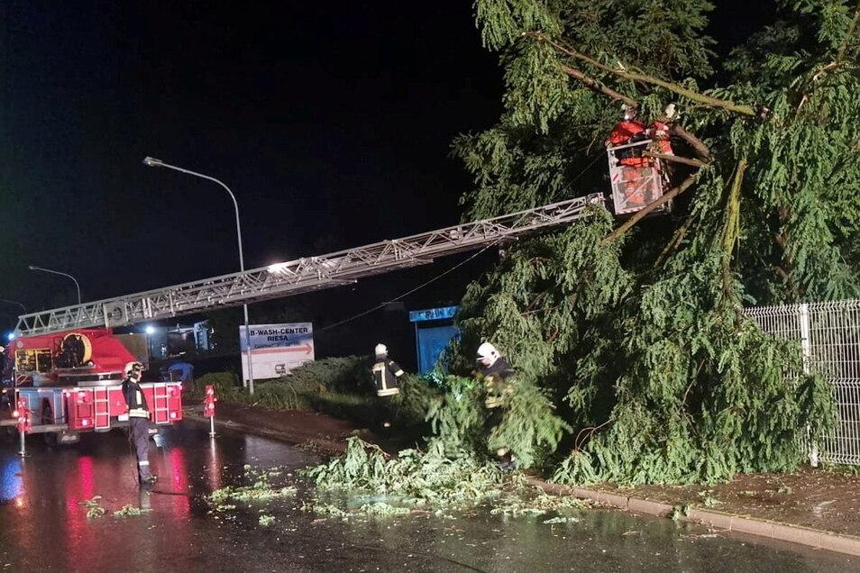 Das Unwetter in der Nacht zu Mittwoch ließ in der Region etliche Bäume umknicken. Hier ein Einsatz der Feuerwehr Riesa an der Lommatzscher Straße.
