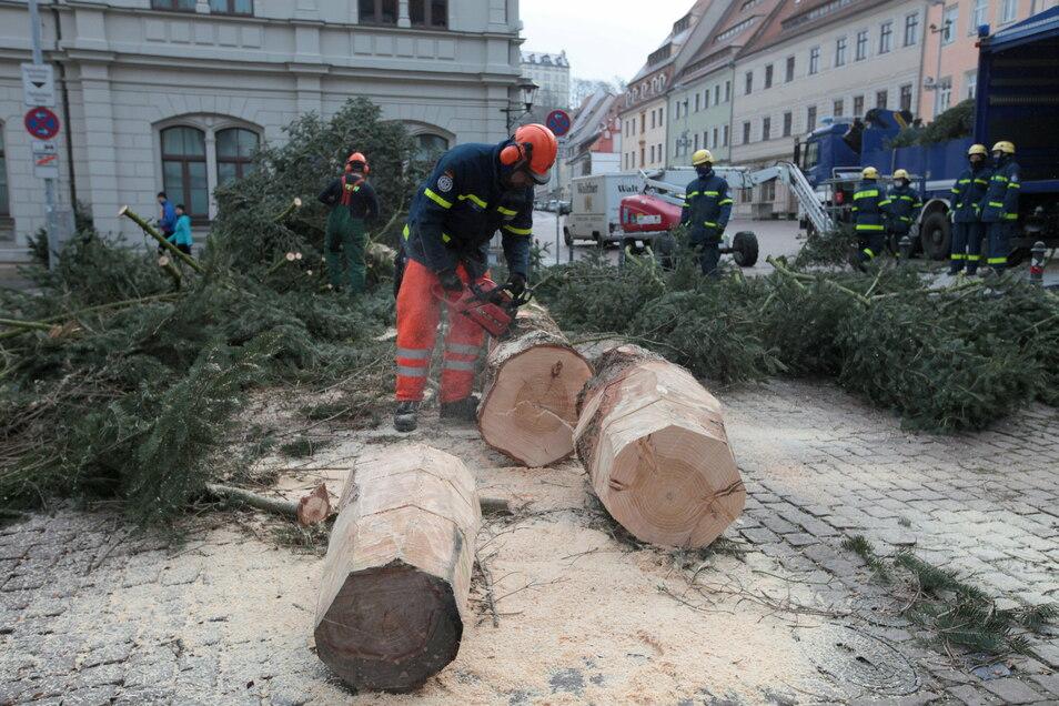 Es war einmal ein Baum: THW-Fachleute zersägen die Pirnaer Weihnachtstanne.