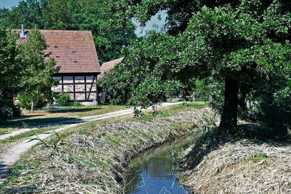 Hier am Schlangengraben, der sich durch den Erlichthof Rietschen windet, soll sich künftig der Standort des geplanten touristischen Fotopoints befinden.