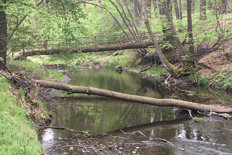 Holzbrücke durch den wildromantischen Wald.