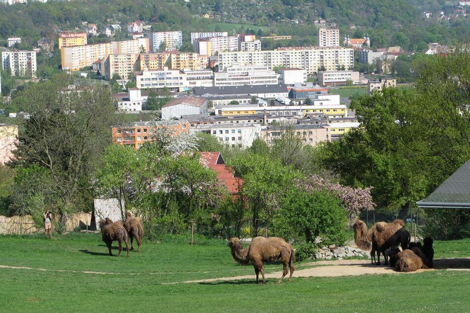 Der Bergzoo in Ústí nad Labem (Aussig) steht mit neuer Direktorin vor großen Veränderungen. Die letzte Elefantin Delhi und einige andere Tiere wie Orang Utans und Raubtiere werden ihn deshalb für einige Jahre verlassen müssen.