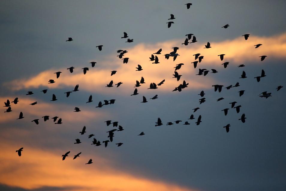 Vögel sind nach Sonnenaufgang am Himmel in der Luft.