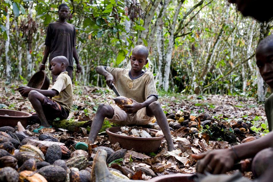Hassan und Hussein Sawadogo (8) arbeiten auf einer Kakaofarm eines Nachbarn in Sinikosson, Elfenbeinküste.