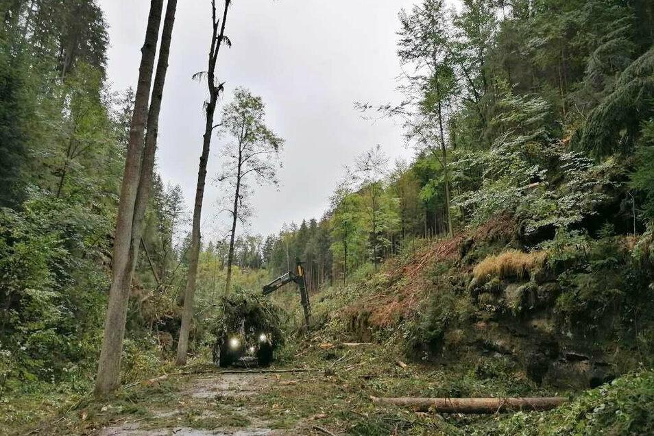 Noch bis zum 23. Oktober sollen die Baumfällarbeiten andauern. Ursprünglioch sollten sie am 16. Oktober abgeschlossen sein.