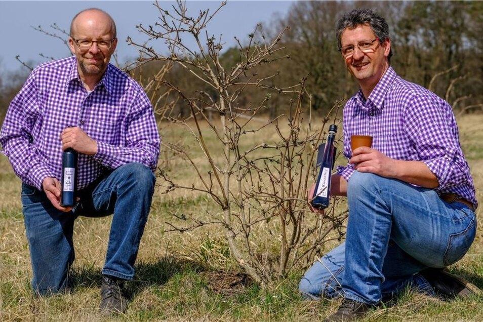 Als bezahltes Hobby bezeichnen Frank Schellmann (li.) und Holger Reinicke – zwei der Bärnsdorfer Holunderlikör-Produzenten – ihre professionell betriebene Nebenbeschäftigung. Vor drei Jahren wurde dafür sogar eine kleine Plantage angelegt.