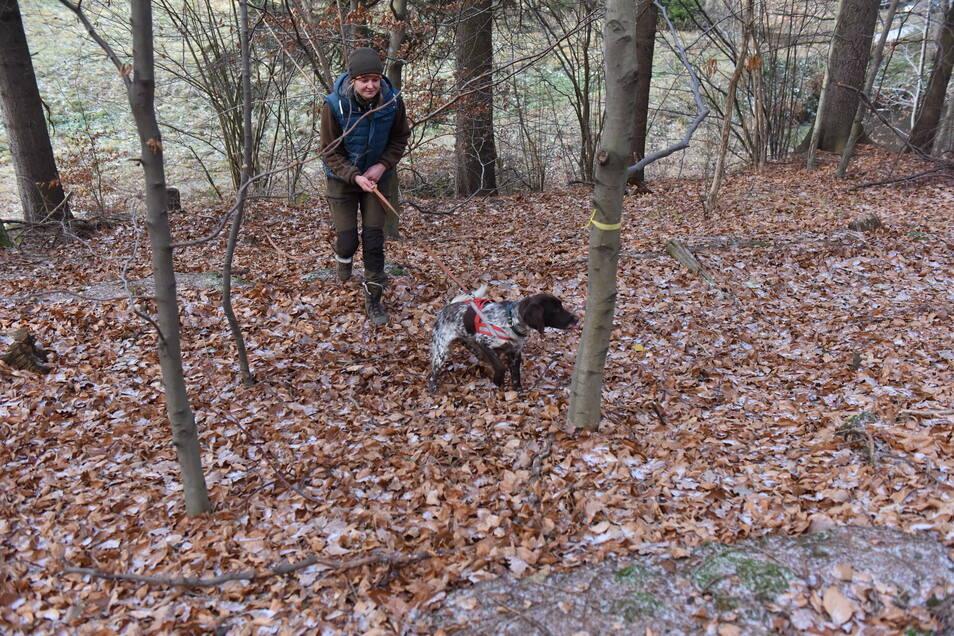 Dem Wild auf der Spur: Münsterländerdame Fee und ihre Chefin Jacqueline Mette folgen der Übungsfährte durch den Wald bei Liebstadt.