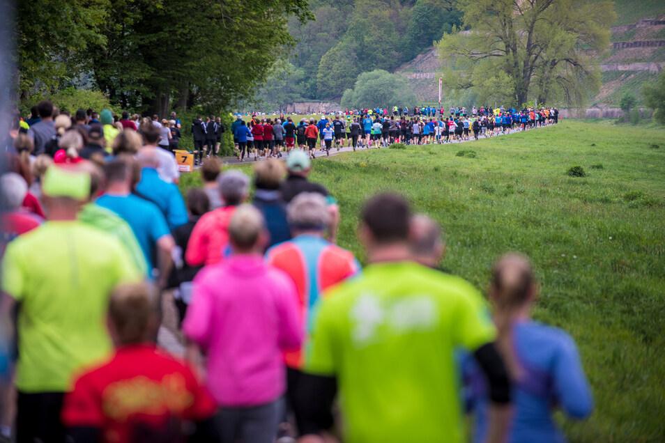 Die Vorbereitungen für den Oberelbe-Marathon laufen, und die Organisatoren sind optimistisch, dass der Elberadweg gut gefüllt sein wird.