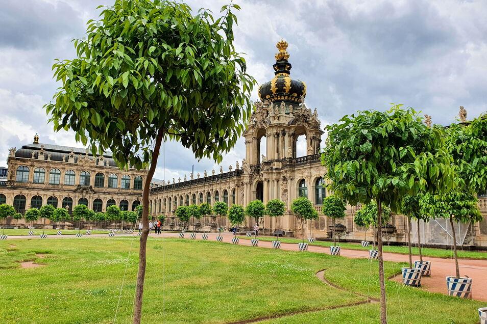 Im Mai sollen wieder die Orangenbäume im Zwinger aufgestellt werden. Allerdings werden es weniger, da der Hof vor dem Porzellanpavillon saniert wird.