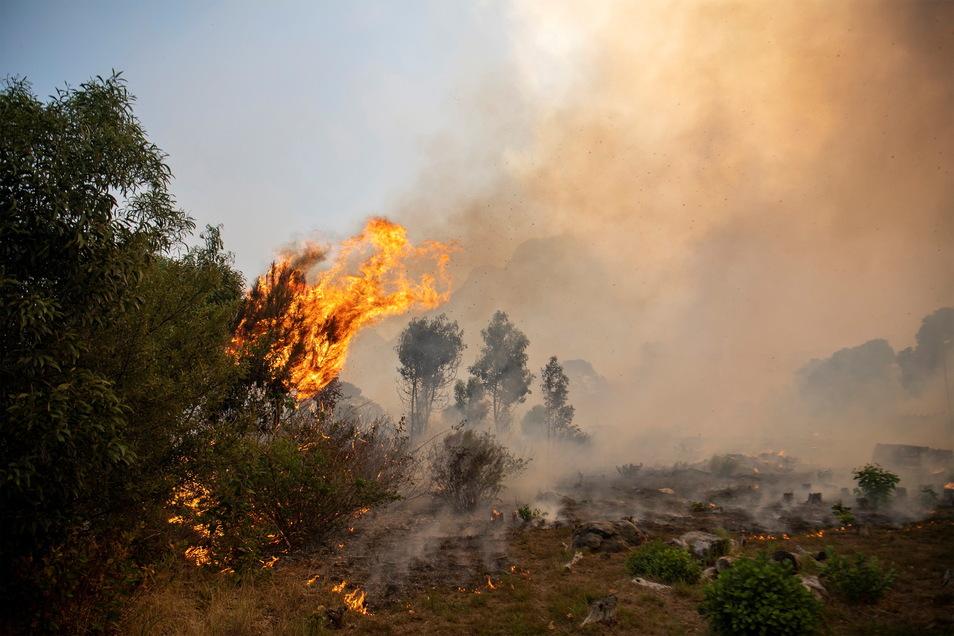 Ein Feuer wütet außer Kontrolle an den Hängen vom Tafelberg. Tausende Studenten der Universität Kapstadt mussten ihre von den Flammen bedrohten Unterkünfte fluchtartig verlassen.