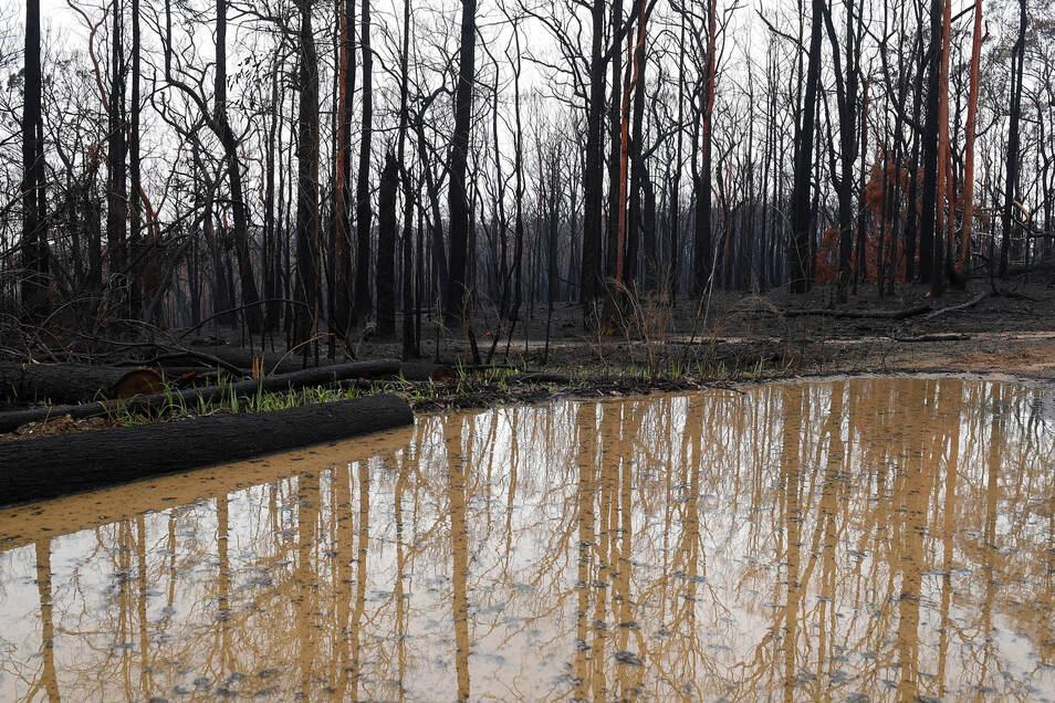 Eine große Regenpfütze hat sich im abgebrannten Buschland in den Blue Mountains westlich von Sydney im Bundesstaat Bundesstaat New South Wales gebildet.