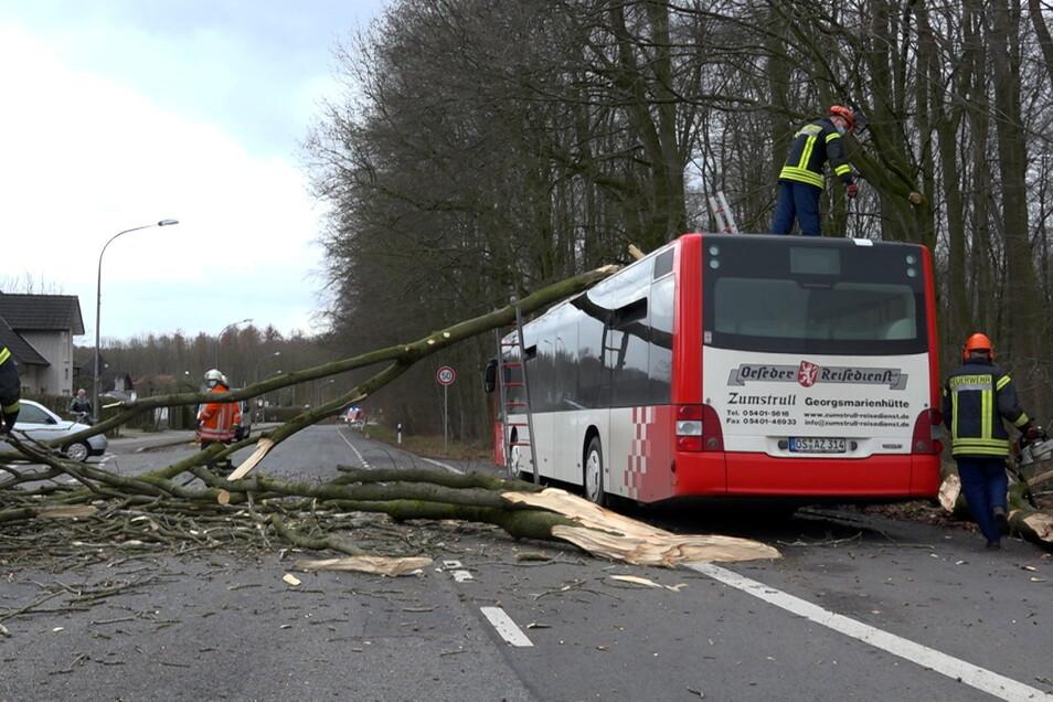 Einsatzkräfte der Feuerwehr entfernen Äste und weitere Teile eines umgestürzten Baums vom Dach eines Linienbusses in Wallenhorst in Niedersachsen.