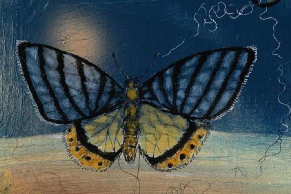 """Der """"Schwarzrippenfalter"""" (Ausschnitt) von Barbara Seidl-Lampa ist in der Galerie zu finden."""