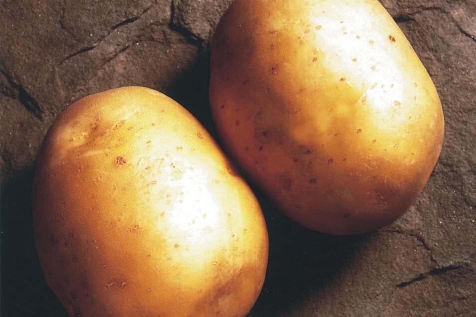 Solist – die Frühe: Vom Austreiben der Blätter bis zur Ernte braucht Solist nur rund 60 Tage. Die ersten Knollen sind schon ab Anfang Juni reif. Schmeckt gut als Pellkartoffel.