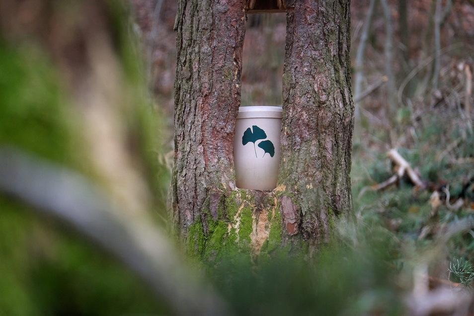 Im Friedwald Oberau gibt es jetzt wieder Waldführungen.
