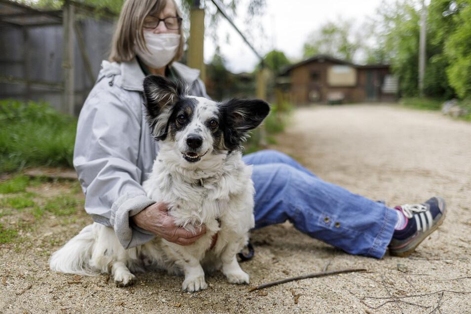 Auch wenn es gerade besondere Bedingungen im Tierheim Görlitz sind, Auslauf will Hund Emmi trotzdem haben.
