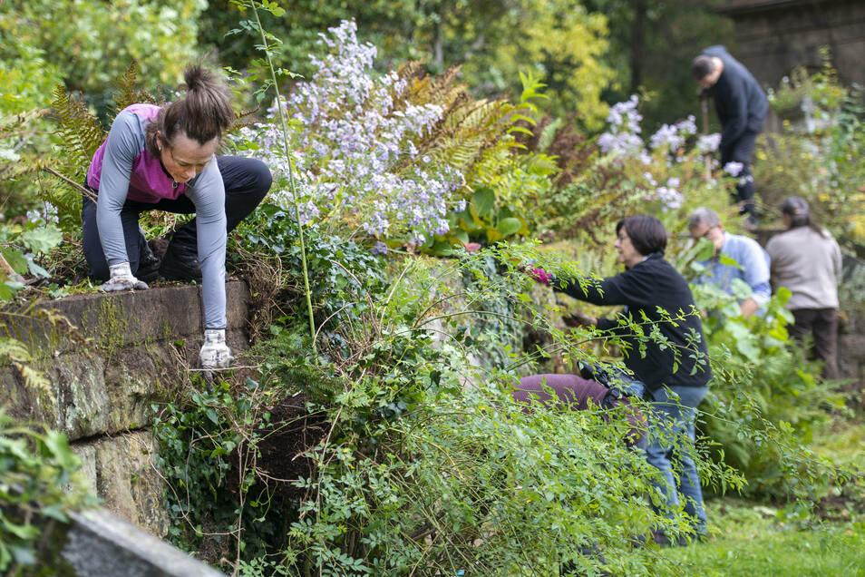 Wildwuchs entfernen und neues Grün pflanzen, darum ging es schon 2019 beim Parkseminar im Schlosspark in Thürmsdorf.