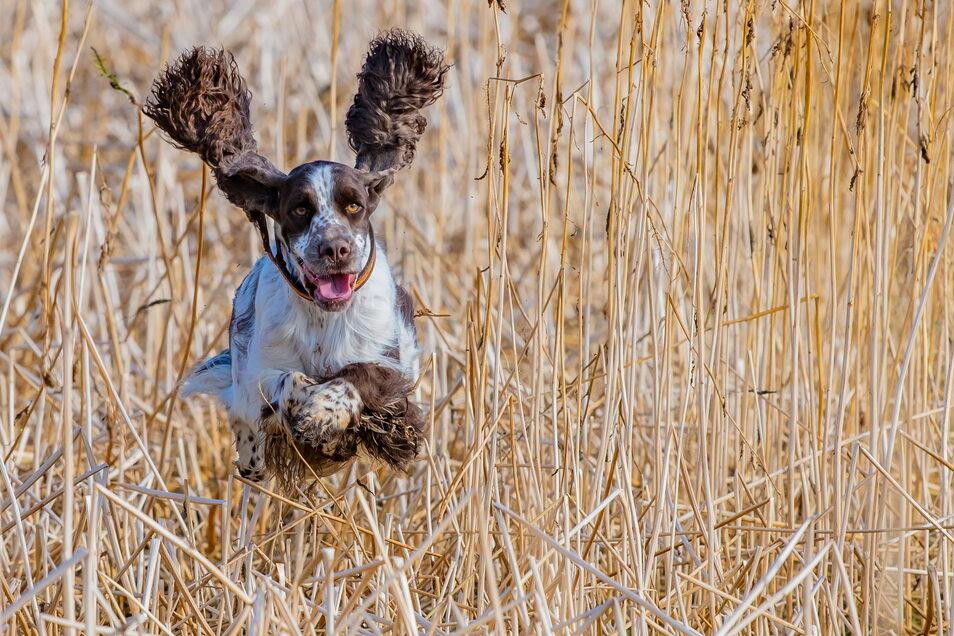Der Hund ist seines Menschen bester Freund: verlässlich, treu, kalkulierbar.