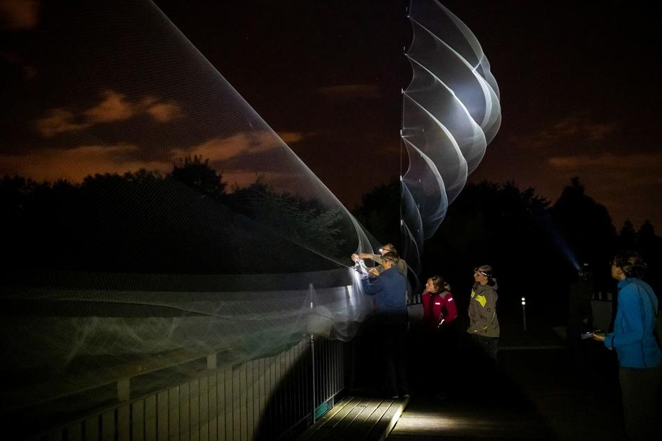 Nach langem Warten geht an der Brücke über dem Bogensee endlich eine Fledermaus ins Netz: Die Leipziger Fledermausschützer holen einen der fliegenden Säuger aus ihren feinen Fangnetzen. Sie ragen bis zu acht Meter in den Himmel.