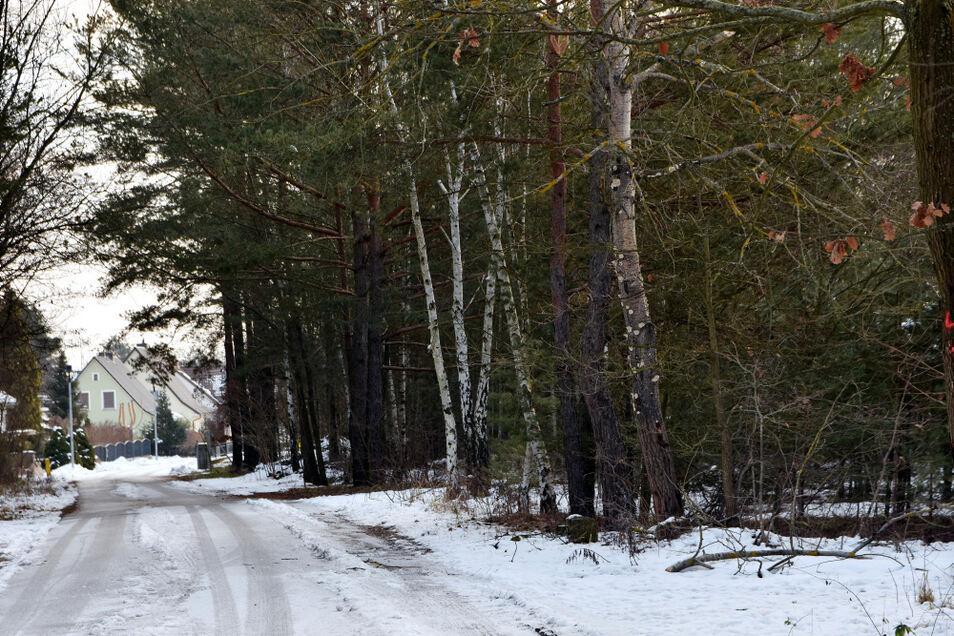 Diese Bäume am Bröthener Weg dürfen jetzt erst einmal stehen bleiben. Denn Pläne zum Fortführen der Wohnbebauung sind vom Tisch.