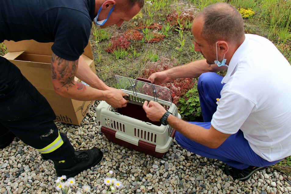 Ein Feuerwehrmann sowie Dr. Sebastian Bauer (r.) setzen die Entenküken behutsam in eine Transportbox.