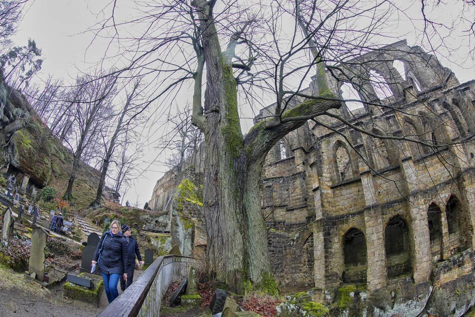 Die Burg- und Klosteranlage auf dem Oybin ist am langen Osterwochenende nicht zugänglich. Sobald wieder geöffnet werden kann, wartet oben auch ein Imbiss.