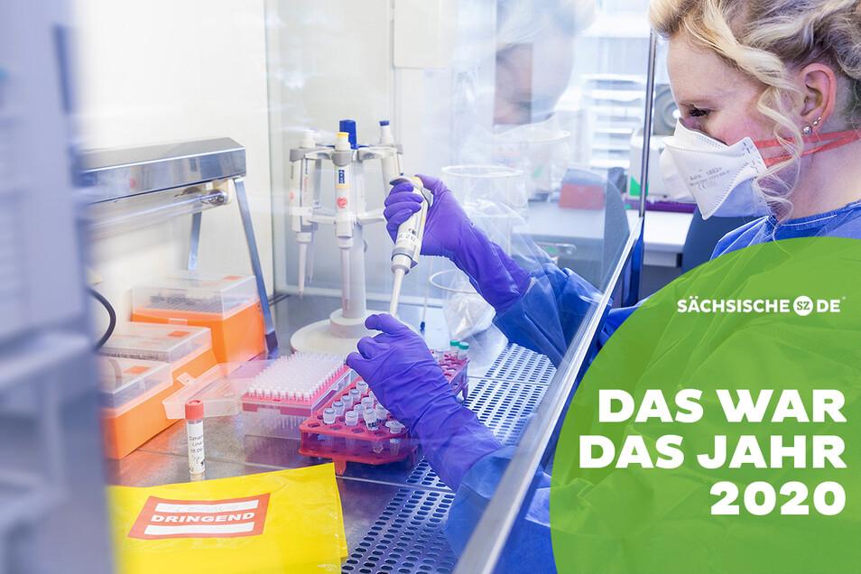 Vorbereitung von Proben, die auf Viren untersucht werden. Das Institut für Medizinische Mikrobiologie und Hygiene sowie Virologie der TU Dresden ist an mehreren Corona-Forschungen beteiligt.