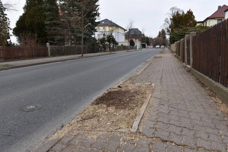Hier in der Rabenauer Straße in Dippoldiswalde standen bis vor Kurzem noch Bäume. Aber am Gehweg sieht man, wie die Wurzeln das Pflaster hochgedrückt haben.