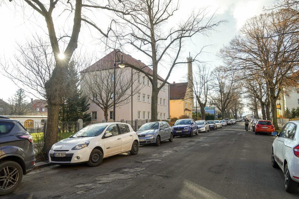 In der Paulistraße in Bautzen rücken kommendes Jahr Bauarbeiter an. Den alten Linden passiert dabei nichts - vorerst.