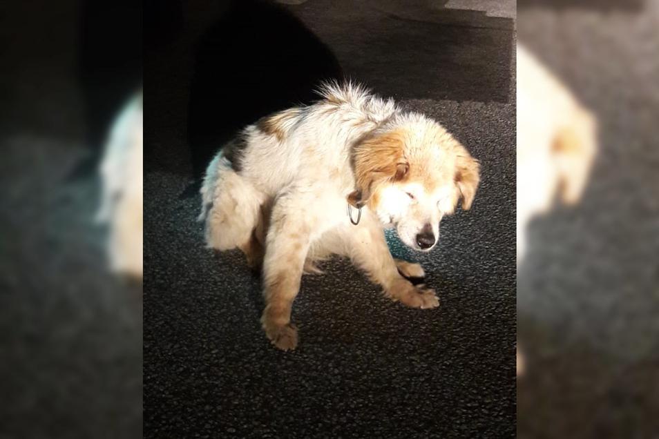 Der herrenlose Hund ist ins Tierheim gebracht worden. Wem gehört er?