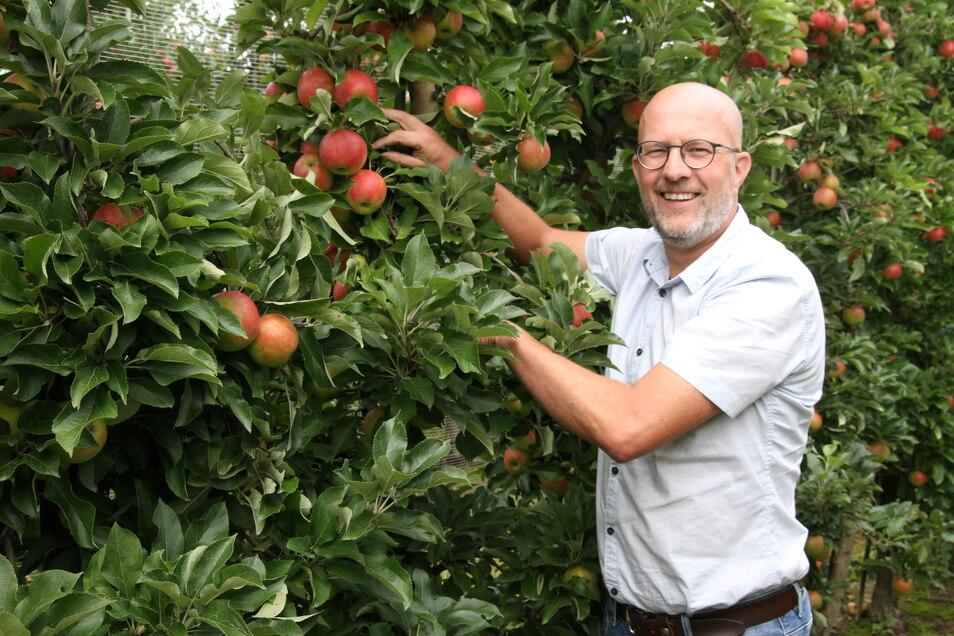 Vorstand Erik Buitenhuis zeigt die Äpfel der Sorte Elstar, die kurz vor der Ernte stehen. Trotz der Verluste im vergangenen Jahr blickt der Holländer optimistisch in die Zukunft.