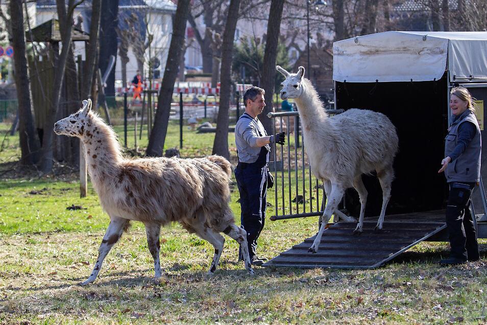 """""""Wir haben vier Lamas geholt und sieben abgegeben"""", sagt Heike Lautenschläger (r.) schmunzelnd."""