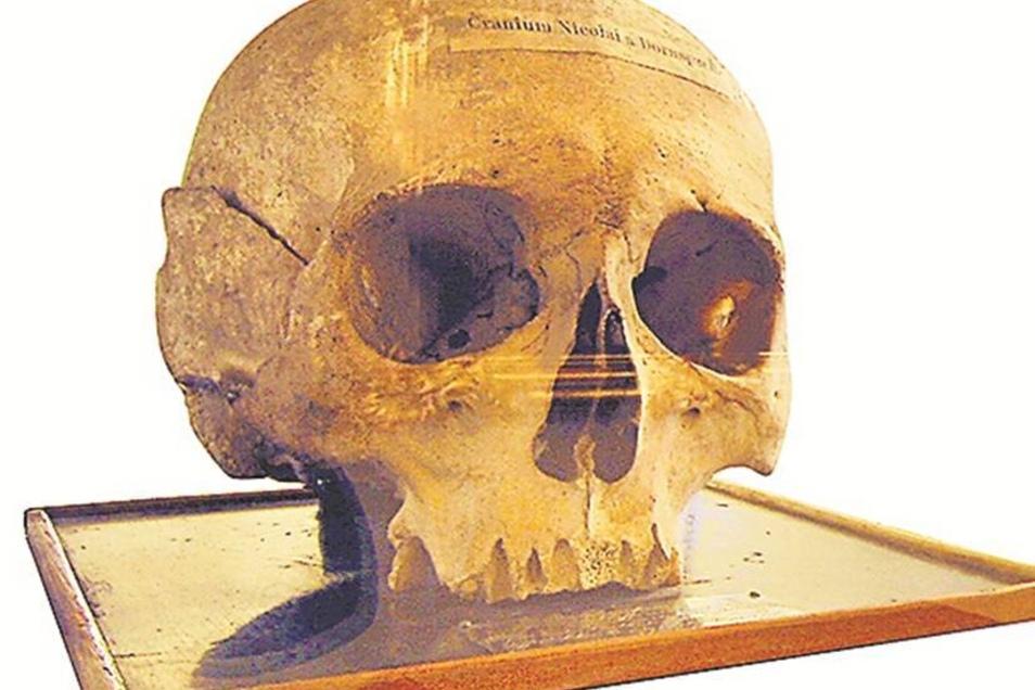 Dornspach-Schädel In der Wunderkammer des Museums ist der originale Schädel des Nikolaus von Dornspach, des wichtigsten Zittauer Bürgermeisters der Renaissance, zu sehen. Ein Nachkomme Dornspachs überließ ihn 1857 dem Museum.Foto: Museum