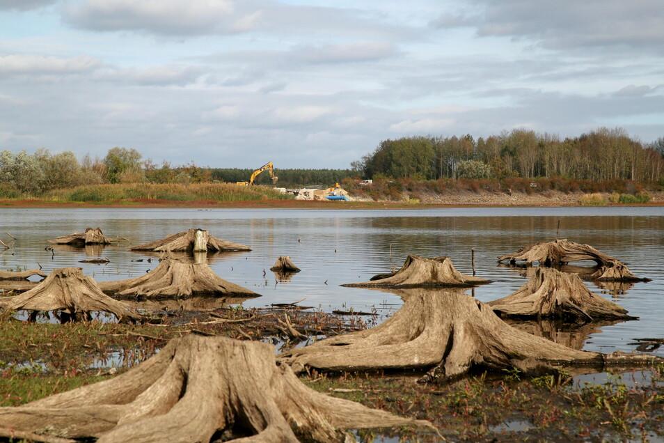2018 wurde der Wasserpegel im Quitzdorfer Stausee schon einmal erheblich gesenkt, um den Damm am Reichendorfer Teilstaubecken sanieren zu können. Ähnlich könnte es bei zunehmender Trockenheit aussehen.