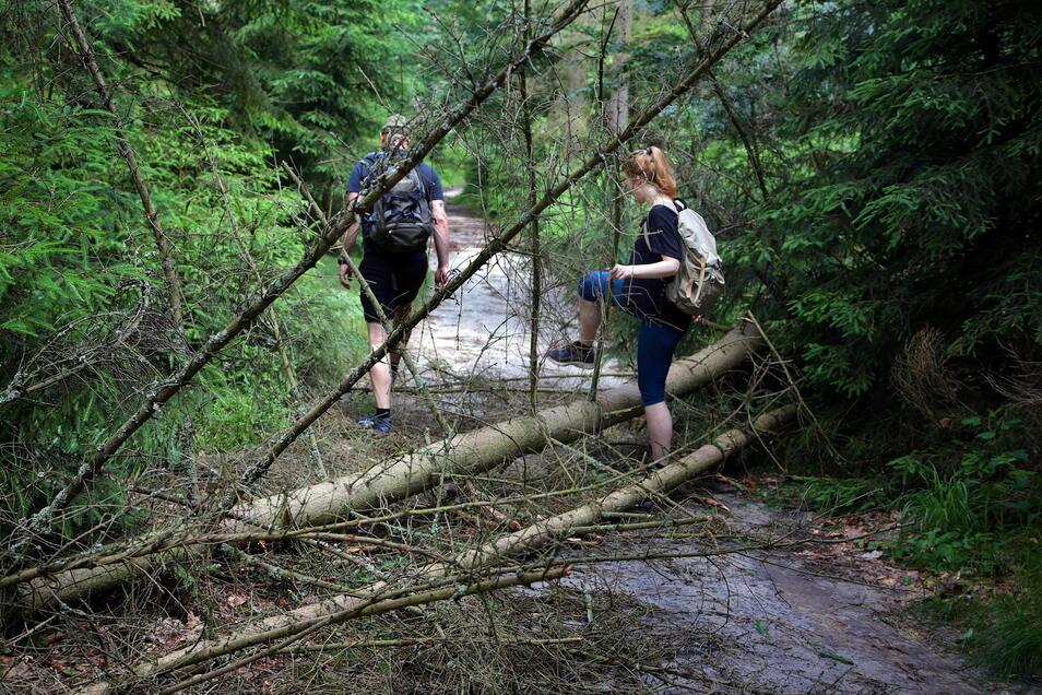 Im Bereich des Heringsgrundes bei Schmilka sind weitere Bäume umgestürzt.