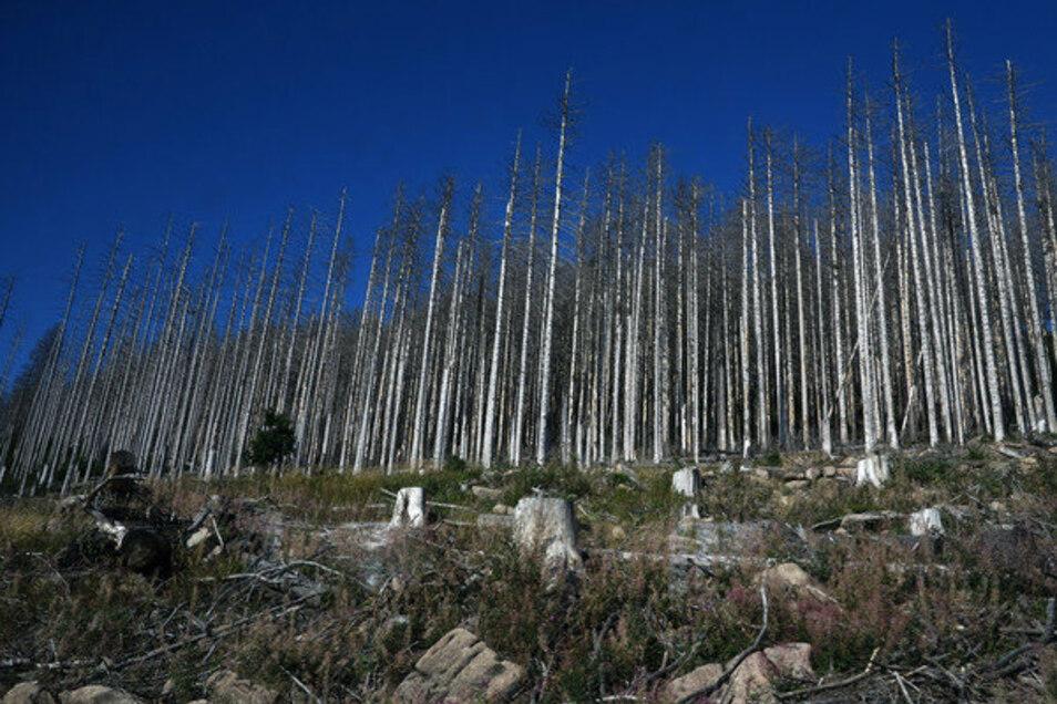 Der Nationalpark Harz unterhalb des Brockens leidet unter langen Hitze - und Trockenperioden. Stürme, Luftverschmutzung und der Klimawandel haben zu einem massiven Baumsterben geführt.