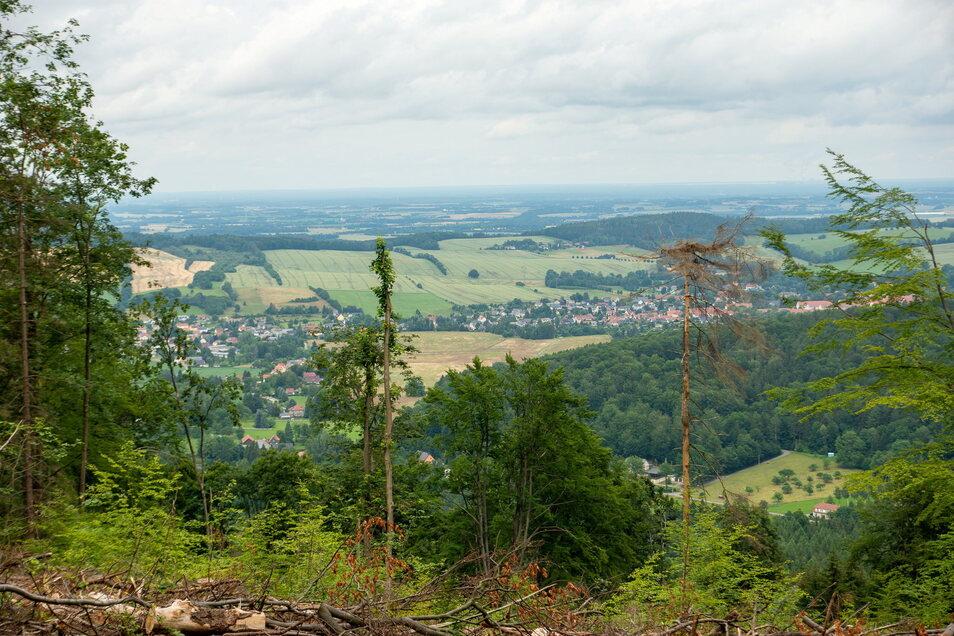 Wo wegen Borkenkäferbefall bereits einige Bäume abgeholzt wurden, soll eine Seilrutsche vom Valtenberg-Gipfel zum Georgenbad führen.
