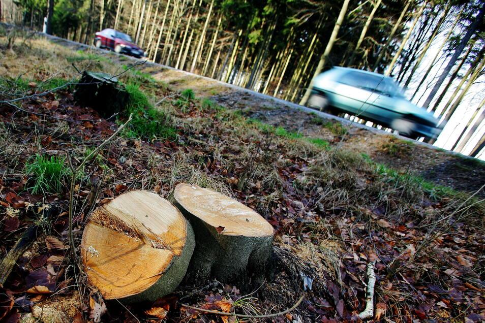 An etlichen Stellen im Landkreis Bautzen wurden Straßenbäume gefällt. Naturliebhaber kritisieren das Verschwinden der Alleen.