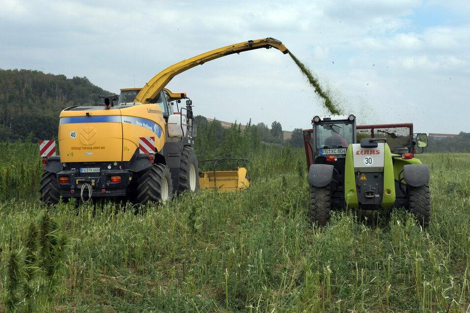 Für die Ernte des Hanfs haben Schönleber und seine Partner herkömmliche Erntemaschinen technisch aufgerüstet. Umsonst war das nicht, auch wenn nun ein Großteil der Ernte nicht wie geplant verarbeitet werden kann.