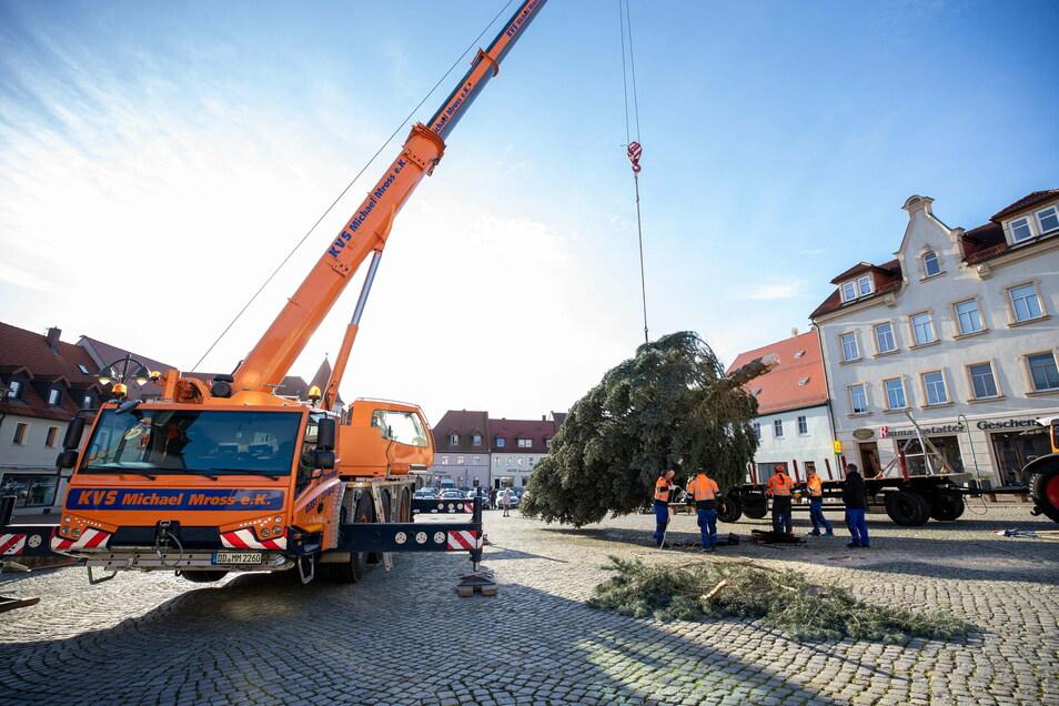 Die 15 Meter hohe Fichte stammt aus einem Privatgarten und schmückt in der Adventszeit 2020 den Wilsdruffer Marktplatz.