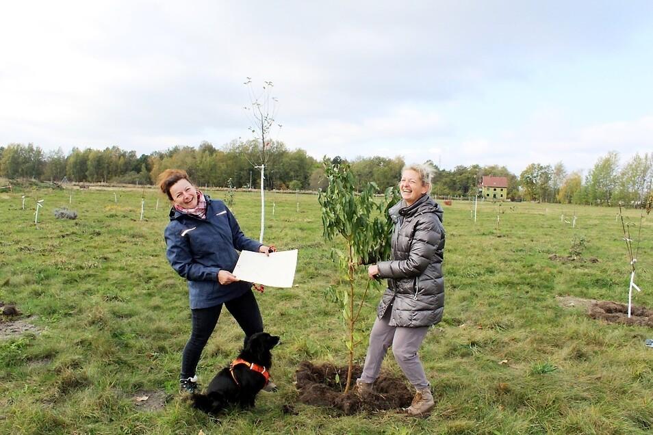 """""""Eine-Stadt-pflanzt""""-Ideengeberin Dagmar Steuer (rechts) und Gartenbauingenieurin Ulrike Kühne retten auch Bäume, die entsorgt werden sollten. Doch auf der Pflanzwiese bekommt das Pfirsichbäumchen eine Chance zum Wachsen."""