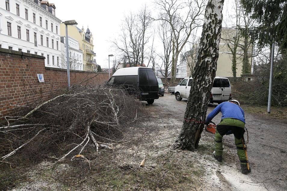 Erste Arbeiten auf dem Gelände an der Jakob-Böhme-Straße fanden schon statt. Um Platz zu schaffen, mussten Ende Februar einige Bäume weichen.